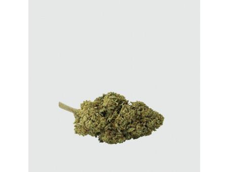CBD konopí - Critical Mass CBD - outdoor - 2 gramy - CBWEED